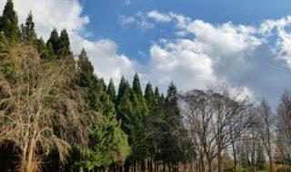 落葉広葉樹と森のはなし