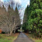 214_広葉樹と針葉樹