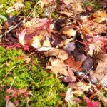 フラボ酸鉄と腐葉土