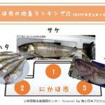 244_にかほ市の地魚ランキング
